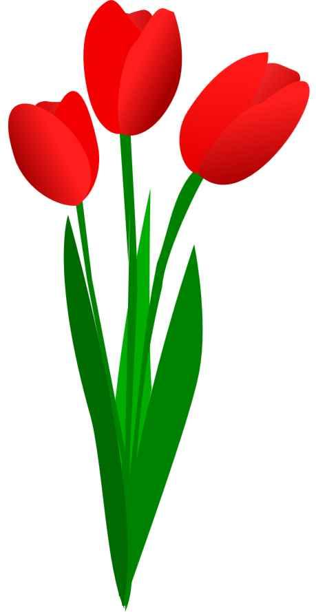 tulpen.jpg